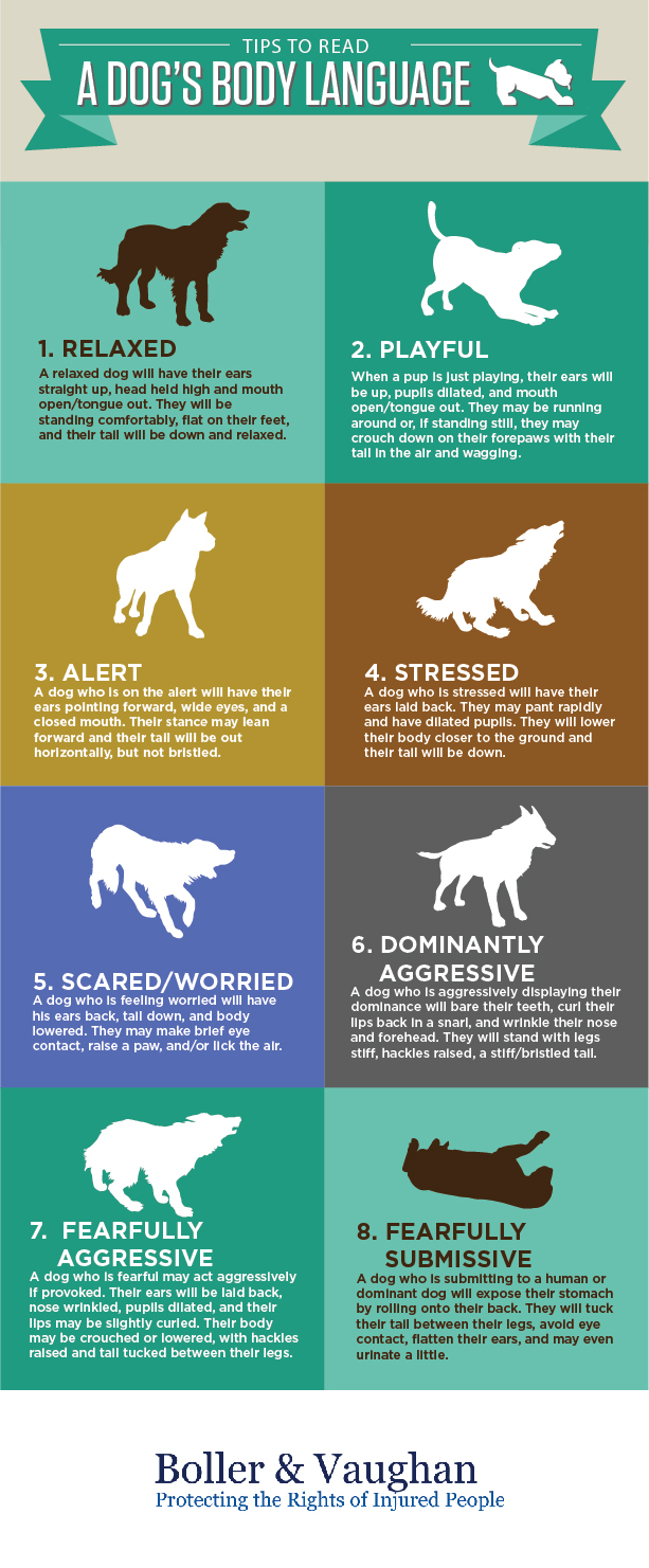 tips for understanding a dog's body language