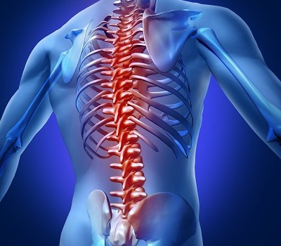 Human backache and back pain with an upper torso body skeleton showing the spine and vertebral column in red highlight as a medical health care concept for spinal surgery and therapy.